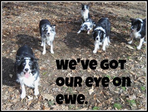 Eye on Ewe (3)