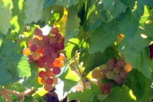John's grapes.