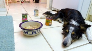 Food made us both so sad. It broke my heart I couldn't feed my puppy.