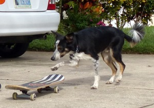 Mick's starting to get the hang of his skateboard!
