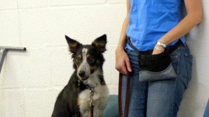Mick watches his classmates during his first Intro to Agility class.