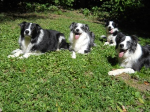 Tulley, Echo, Mirk, and Roy, who was just visiting.